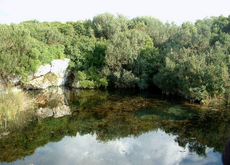 Italian botanical heritage riserva naturale palude del conte for Tartaruga di palude