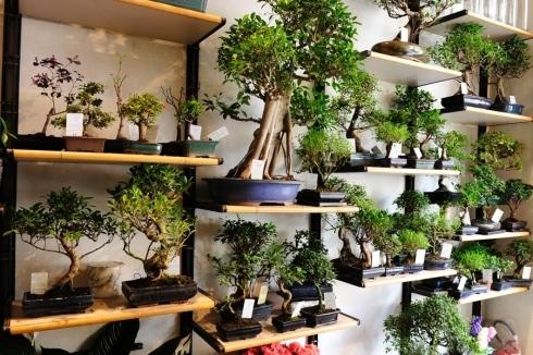 Italian botanical heritage clinica del bonsai for Accessori per bonsai