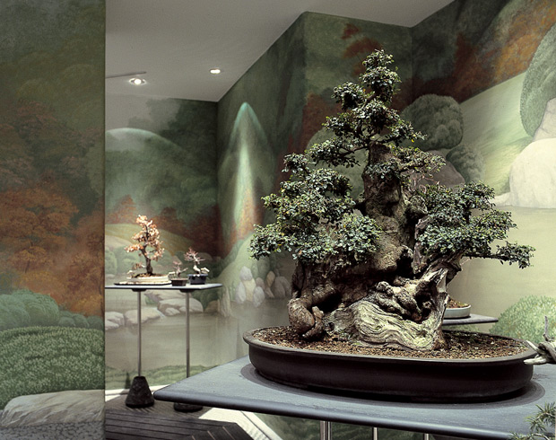 Italian botanical heritage crespi bonsai for Vasi bonsai giapponesi