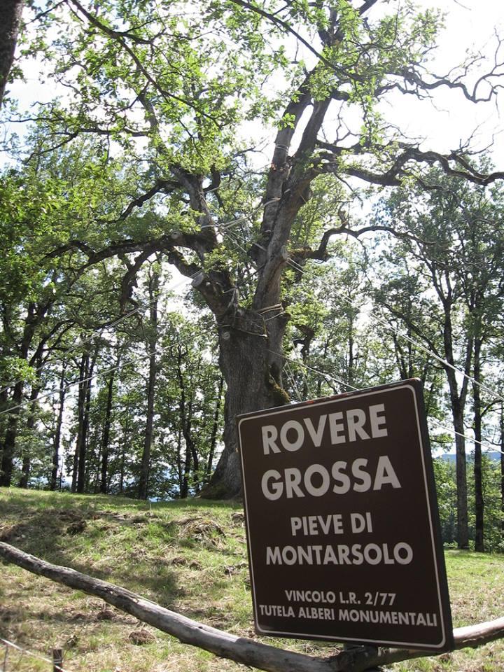 Italian botanical heritage roverella rovere grossa for Attrezzatura agricola usata lazio