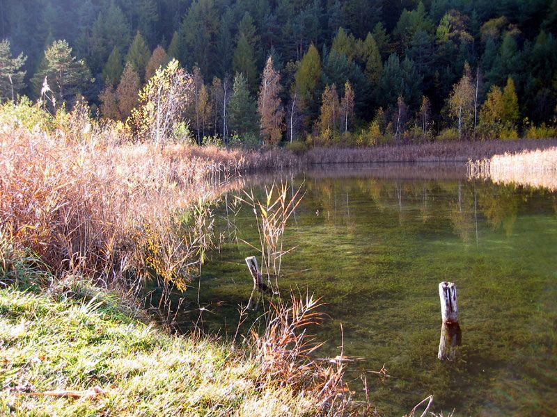 Italian botanical heritage riserva naturale speciale for Piante dello stagno