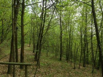 Parco Naturale Rocchetta Tanaro