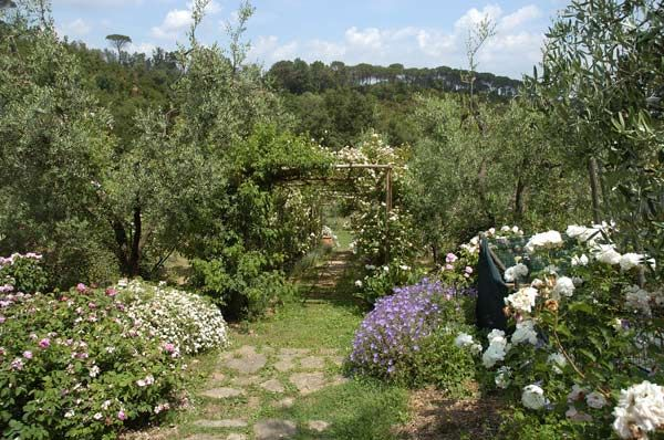 Italian botanical heritage il giardino delle rose - Il giardino delle rose ...
