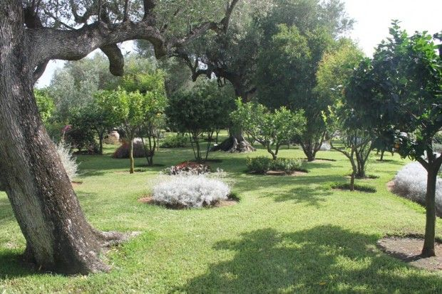 Italian botanical heritage giardino botanico happy village - Alberi condominiali in giardini privati ...